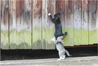 kitten-teamwork-big